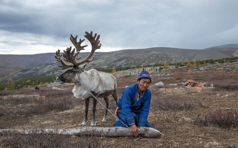 Reindeer herder in Norway