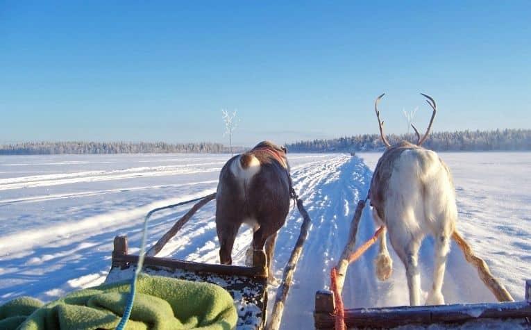 Reindeer pulling carts