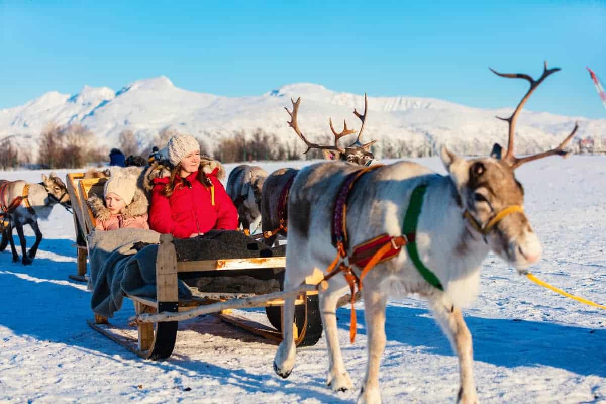 Reindeer on a sleigh ride