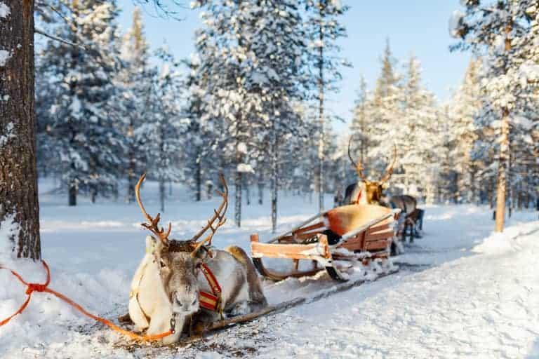 reindeer pulling a sleigh