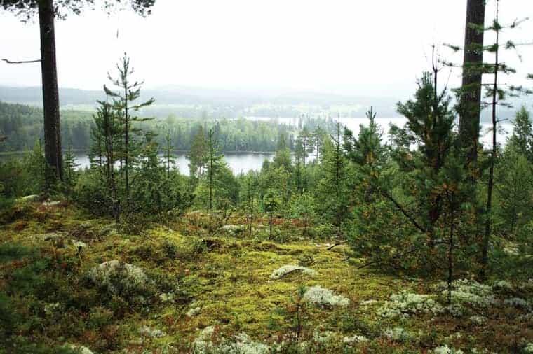 Northern Sweden Landscape