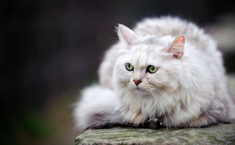 Vikings pet cats